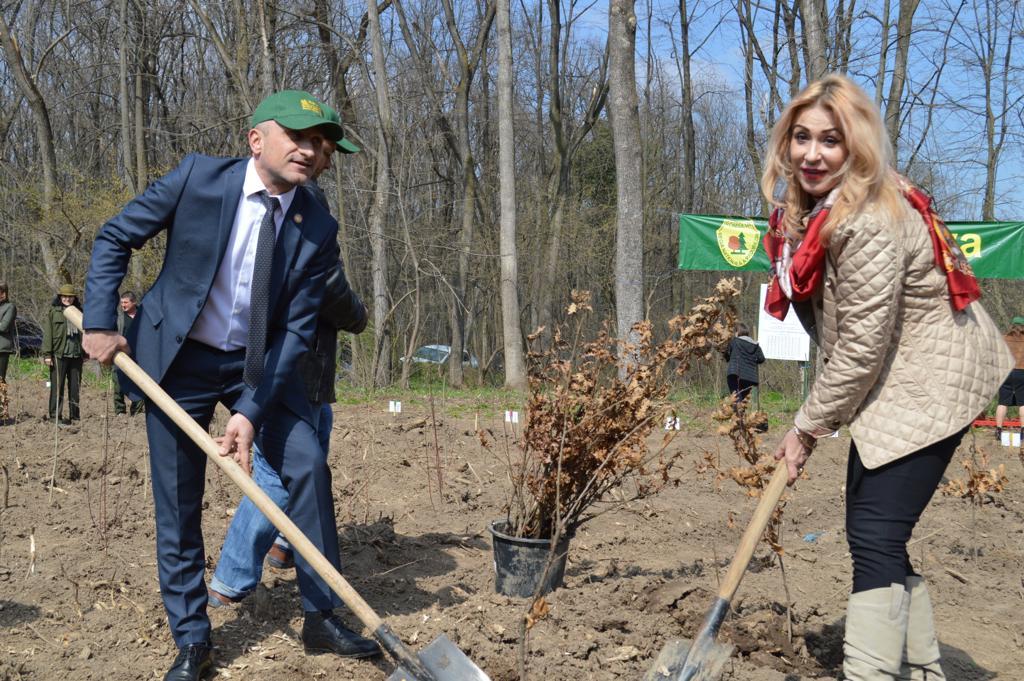 Luna plantării arborilor, Ziua Internațională a Pădurii